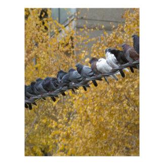 Pigeons Letterhead