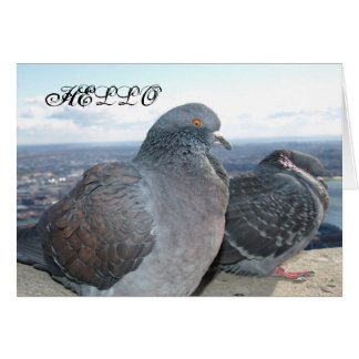 Pigeons Note Card