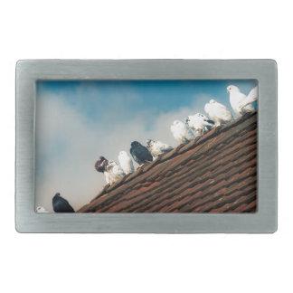 Pigeons Rectangular Belt Buckles