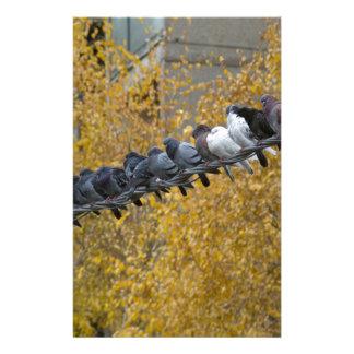 Pigeons Stationery