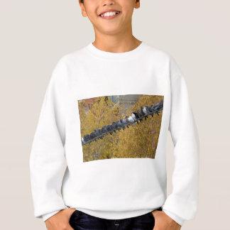 Pigeons Sweatshirt