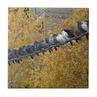Pigeons Tile