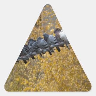 Pigeons Triangle Sticker