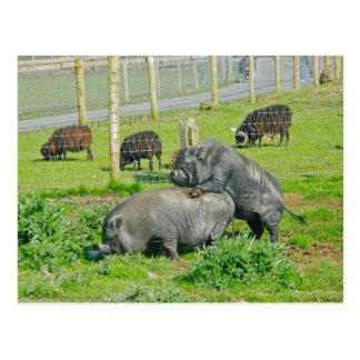 Piggy Back Ride Postcard