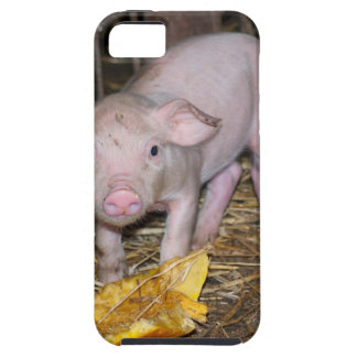 Piggy farm case for the iPhone 5