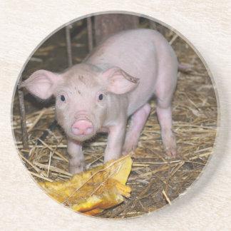 Piggy farm coaster