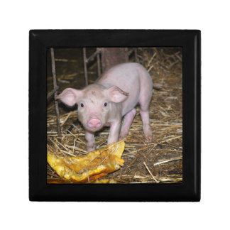 Piggy farm gift box