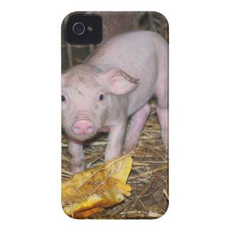 Piggy farm iPhone 4 Case-Mate case