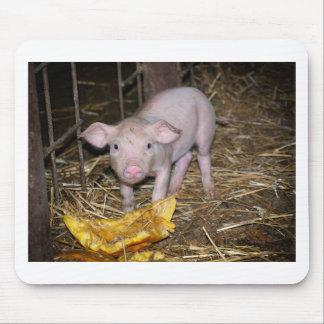 Piggy farm mouse pad