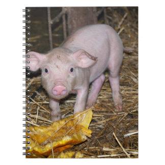 Piggy farm notebook