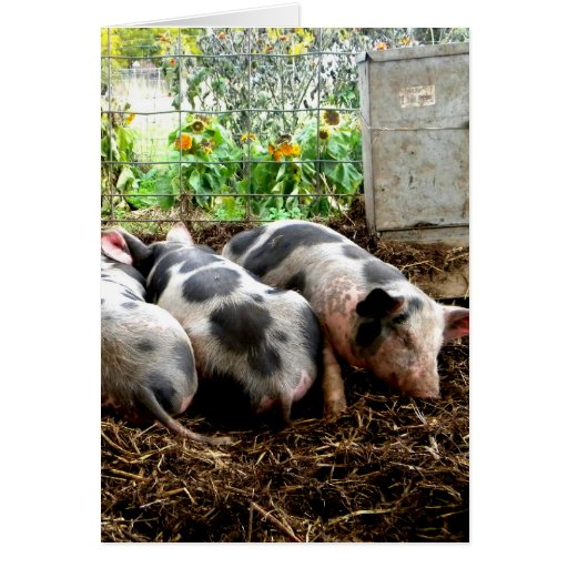 Piggy Pile Greeting Card