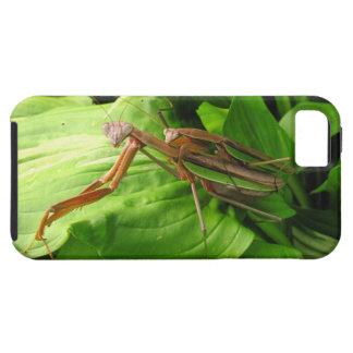 Piggyback Mantis ~ iPhone 5 CaseMate Vibe iPhone 5 Cover