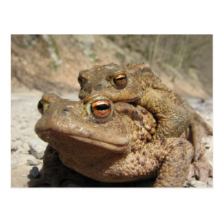 Piggyback Toads Postcard