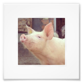 Piglet Photography Photograph