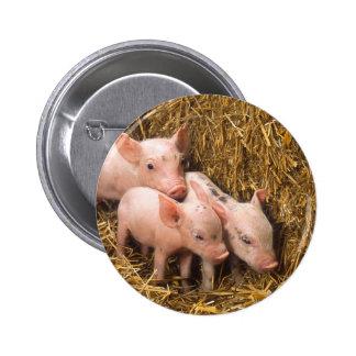Piglets 2 Inch Round Button