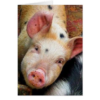 PIGS CARD