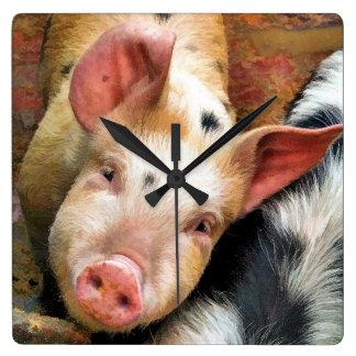 PIGS CLOCKS