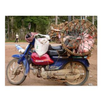 Pigs on motorbike-Cambodia Postcard