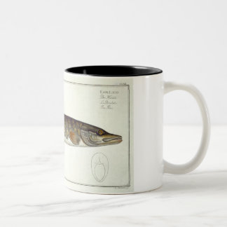 Pike (Esox Lucio) plate XXXII from 'Ichthyologie, Two-Tone Coffee Mug