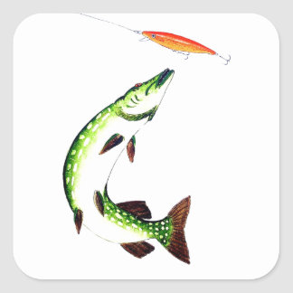 Pike fishing and fly fishing square sticker