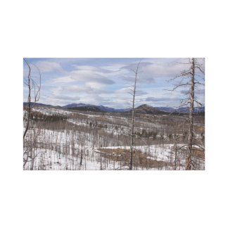 Pike Forest Canvas Print