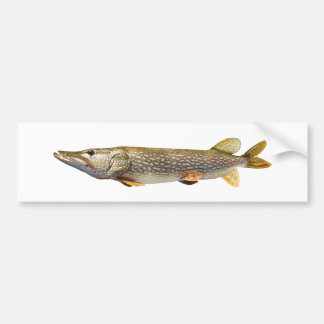 Pike Muski fishing Bumper Sticker