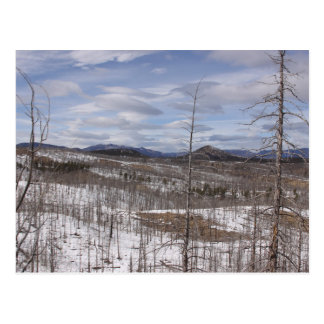 Pike National Forest Postcard