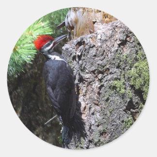pilated woodpecker round sticker