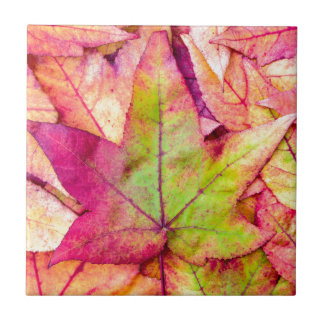 Pile of maple leaves in fall colors tiles