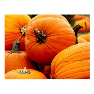 Pile of Pumpkins Postcard
