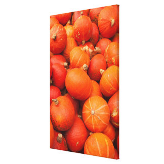 Pile of small pumpkins, Germany Canvas Print