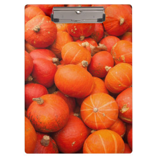Pile of small pumpkins, Germany Clipboard