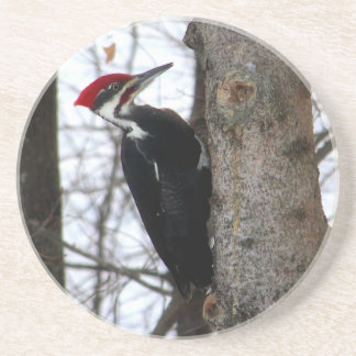 Pileated Woodpecker Beverage Coaster