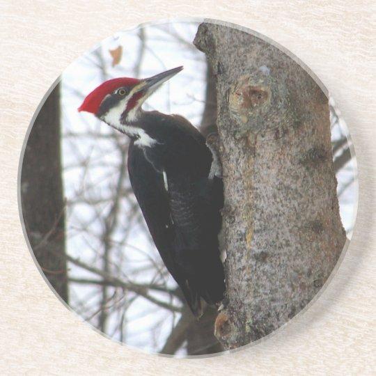 Pileated Woodpecker Coaster