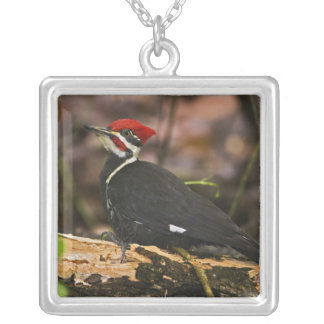 Pileated Woodpecker, Dryocopus pileatus, Silver Plated Necklace