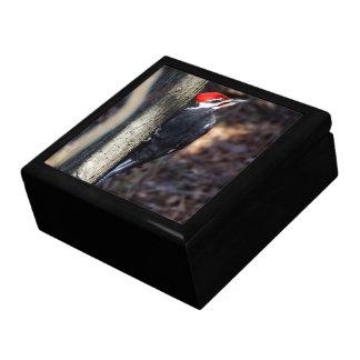 Pileated Woodpecker Keepsake Gift Box