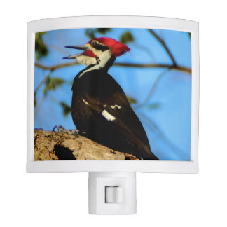 Pileated Woodpecker Night Light