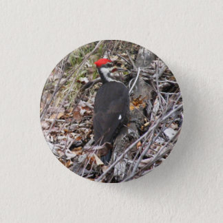 Pileated Woodpecker Pecking Button