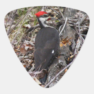 Pileated Woodpecker Pecking Guitar Pick