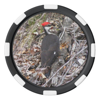 Pileated Woodpecker Pecking Poker Chips