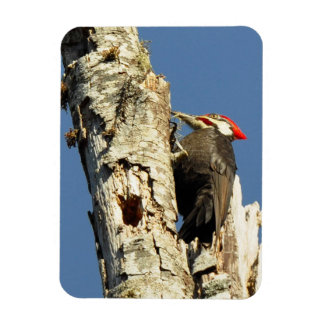 Pileated Woodpecker Rectangular Photo Magnet