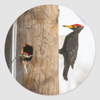 Pileated Woodpecker Round Sticker