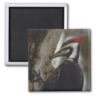 Pileated Woodpecker Square Magnet