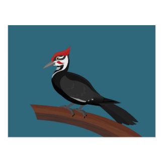 Pileated Woodpecker Vector Art Postcard