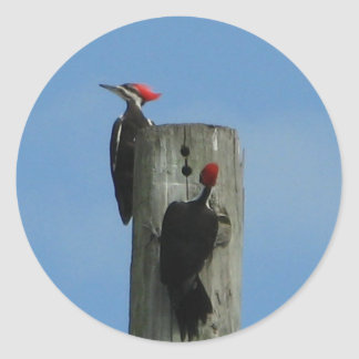 Pileated Woodpeckers Sticker
