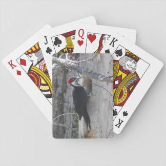 piliated WoodPecker Playing Cards