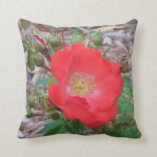 pillow - dark salmon colored old fashion rose