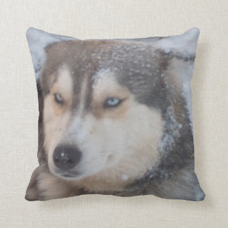 Pillow Husky Blue Eyes In The Snow, Blue Back