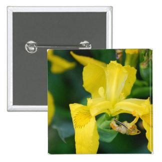 Pin d iris jaune badge