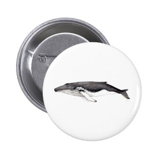 Pin´s, button, broach hunchbacked whale, yubarta 2 inch round button